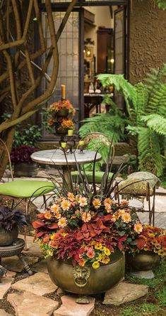 Juice Bar is a combination of beautiful plants thats perfect when surrounded by upcycled brass pieces. Rustic luxury at its finest. Reuse Containers, Fall Containers, Container Plants, Container Gardening, Gardening Tips, Short Plants, Tall Plants, Outdoor Rooms, Outdoor Gardens