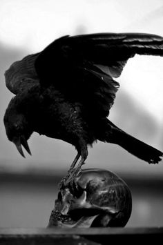 Nothing says a Edgar Allen Poe, like this photo of the raven and the skull.