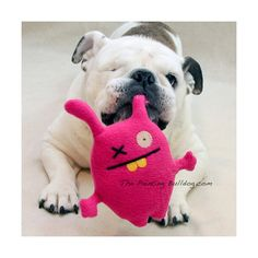 One-eyed Dolls - English Bulldog with Pink Plush Doll - Piper Stone - Rescue and Special Needs Dog - Bulldog Photo - Cute Dog Photo - 6x6 on Etsy, $8.00