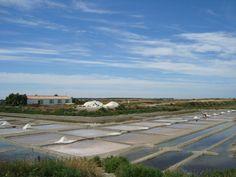 Ecomusée du Marais salant à Loix - Découvrez toute la tradition de la culture du sel sur l'île de Ré   Charente-Maritime Tourisme #charentemaritime   #maraissalant   #sel   #pôlesnature
