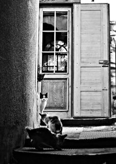 black and white _cats_damascus_syria