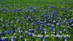Get out and enjoy the State Flower this week in Glen Rose!  #exploreglenrose