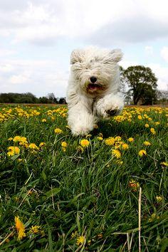 run+Sophie+run..