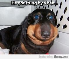I feel sooooo bad for this poor puppy but I've laughed every single time I've scrolled past this so....