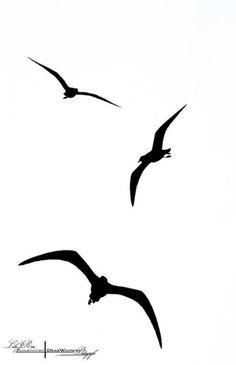 Tattoo Bird Silhouette Deviantart New Ideas Bird Silhouette Tattoos, Flying Bird Silhouette, Silhouette Art, Seagull Tattoo, Tatoo Bird, Fly Drawing, Tattoo Sticker, Bird Clipart, Jungle Clipart