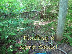 Finding a secret Oasis!
