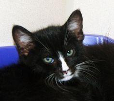 Cats & Kittens | MISTY  petprojectfoundation.org
