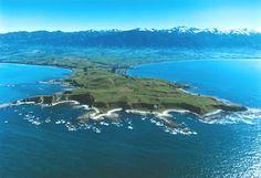 Kairkoura - New Zealand