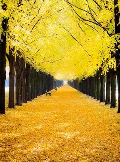 Germany. This would literally make me so happy. I love watching leaves fall to the ground! So pretty.