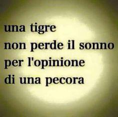 Un tigre no pierde el sueño por la opinión de una oveja.