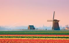 See The Blooming Tulip Fields In The Netherlands By Bike And Barge (Spring Only)