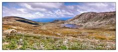 Wildflowers on Mount Kosciuszko Wildflowers, Climbing, Places Ive Been, Landscapes, Journey, Mountains, Water, Travel, Paisajes