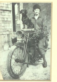 """Dachsie comes from a long line of crime-solving dachshunds. Here is his great-grandmother Miss Petunia Bridgewater Fosterwein solving the case of the stolen motorbike!  """"Dogs feel very strongly that they should always go with you in the car, in case the need should arise for them to bark violently at nothing right in your ear."""" - Dave Barry"""