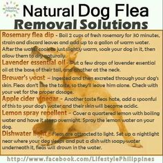 Natural flea remedies