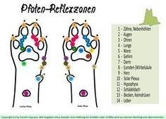 Pfoten - Reflexzonen