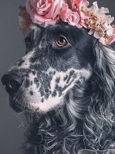 Make one special photo charms for your pets, compatible with your Pandora bracelets. A beautiful English Setter with a flower crown. Portrait by Pouka Fine Art Pet Portraits. Animals And Pets, Baby Animals, Funny Animals, Cute Animals, Cute Puppies, Cute Dogs, Dogs And Puppies, Doggies, Beautiful Dogs