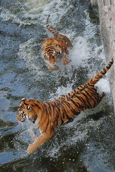 Tiger Splash!!---- th most Luxury Designer Resale: Stylist-Selected, Amazingly Priced  Welcome Deborah