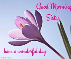 Looking for Good Morning Wishes for Sister? Start your day by sending these beautiful Images, Pictures, Quotes, Messages and Greetings to your Sis with Love. Good Morning Sister Images, Good Night Sister, Special Good Morning, Good Morning Happy Sunday, Love My Sister, Good Morning Funny, Good Morning Picture, Good Morning Greetings, Good Morning Wishes