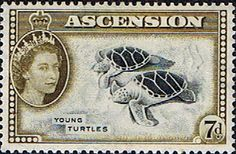 Postage Stamps Ascension 1956 Queen Elizabeth II  Turtles SG 65 Scott 70 Fine Mint For Sale Take a look