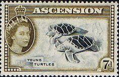 Postage Stamps Ascension 1956 Queen Elizabeth II  Turtles SG 65 Scott 70 Fine Mint For Sale Take a look