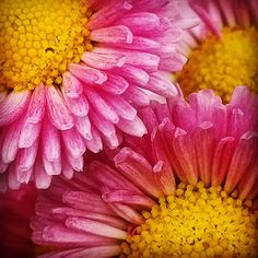 http://www.paperseedlings.com/2015/09/focus-friday-pink-lace.html