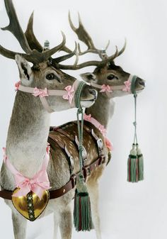 The reindeer get all dressed up in bows for a pink Christmas! Merry Little Christmas, Noel Christmas, Pink Christmas, Winter Christmas, All Things Christmas, Vintage Christmas, Reindeer Christmas, Merry Xmas, Reindeer Photo