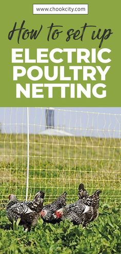 The best part about portable electric poultry netting is that it can be easily moved to allow your chickens to free-range in another area. Let's see how to set up Electric Poultry Netting. Chicken Facts, Chicken Life, Chicken Feed, Raising Backyard Chickens, Keeping Chickens, Meat Chickens, Raising Quail, Raising Ducks, Electric Poultry Netting