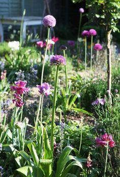 Jane Cumberbatch`s Pure Style - Blog Lovely flowers!