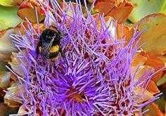 Photograph - Bumble Bee On Artichoke Flower by Nareeta Martin