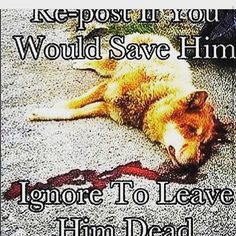 Normally I don't do the repost if you would do this but obviously I would save this dog!