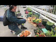 ▶ Guerilla Gardening / ゲリラ・ガーデニング with Vallicans & Harvester - YouTube