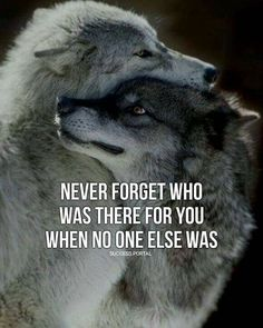 195 Best Wolf Quotes images in 2019 | Motivation quotes