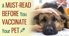 If you suspect that your dog is suffering from granulomatous meningoencephalitis (GME), you should get her to a vet as soon as possible. http://healthypets.mercola.com/sites/healthypets/archive/2014/08/03/granulomatous-meningoencephalitis.aspx