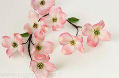 {AWE-Inspiring Pink Dogwood Flowers from  The Sugar Garden}