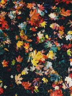 Love these colourful autumn leaves, look at all those autumnal colours! Autumn Day, Autumn Leaves, Winter, 4 Wallpaper, Autumn Aesthetic, Seasons Of The Year, Illustration, Foto Art, Autumn Inspiration