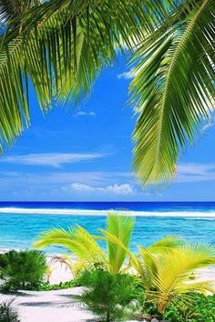 One of the many awesome places on Earth is a island beach that is small. This tiny green swath of land is my idea of paradise with brilliant beaches, warm water, and lush vegetation. Beach Pictures, Nature Pictures, Beautiful Pictures, Dream Vacations, Vacation Spots, Tropical Beaches, Island Beach, Small Island, Tropical Paradise