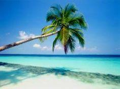 #palmera en horizontal