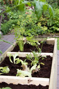 Een leuke DIY! Een zelfgemaakte moestuinbak voor in je tuin of op het balkon | Woonguide.nl