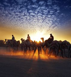 camel riders Photo by ummer ta ummer ta -- National Geographic Your Shot Photography Sites, Animal Photography, Amazing Photography, Travel Photography, Voyage Dubai, Dubai Travel Guide, Dubai City, Dubai Uae, Destinations