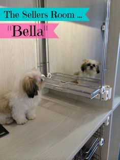 """The Sellers Room very own """"Bella"""" gets ready for her day at the office ... #Bella at The Sellers Room, www.thesellersroom.co.nz"""