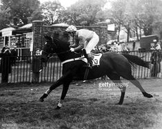 Image Archive, Grand National, Horse Racing, Crisp, Horses, Pictures, Fictional Characters, Jumpers, Box