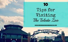 10 Tips for Visiting The Toledo Zoo