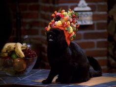Fruit-Hat Salem