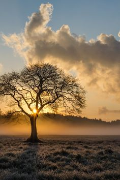 alone, clouds, daylight