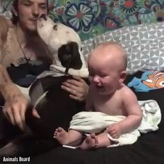Dachshund is found pregnant and abandoned, then vet looks closer and realizes the unthinkable Excesso de fofura …‼‼‼‼ Cute Funny Babies, Cute Funny Animals, Cute Baby Animals, Funny Cute, Funny Kids, Funny Shit, Cute Kids, Funny Humor, Cute Baby Videos