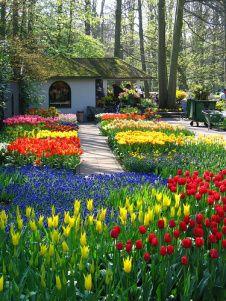 Amsterdam's Keukenhof Gardens, The Netherlands - photo from RedMaps