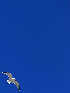 Gull, Tallinn bay, Estonia