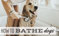Dog Grooming Clippers, Dog Grooming Tips, Dog Separation Anxiety, Dog Anxiety, Bathing A Puppy, Dog Cleaning, Cleaning Tips, Dog Tags Military, Dog Wash