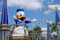 Disney Parade Donald Duck  Walt Disney World Resort Hotels Orlando.Enjoy the rides, the parades, and everything else Walt Disney World has to offer by staying at a nearby resort
