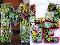 How gorgeous are these succulent monogrammed planter boxes?